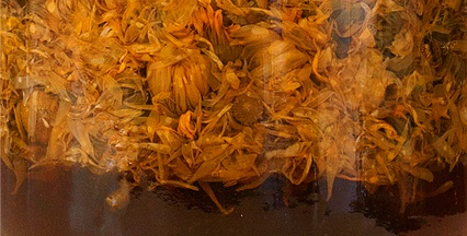witch-hazel-calendula-infusion