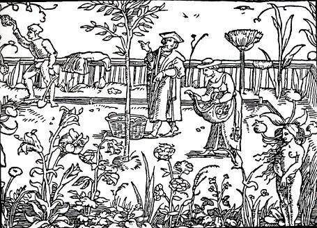 A medieval herb garden.
