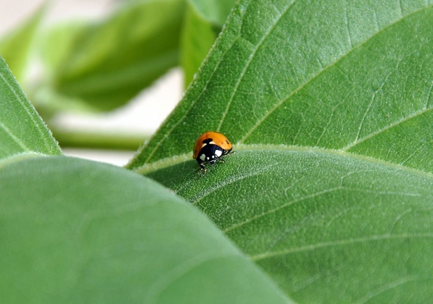 Lady Bug and Leaf