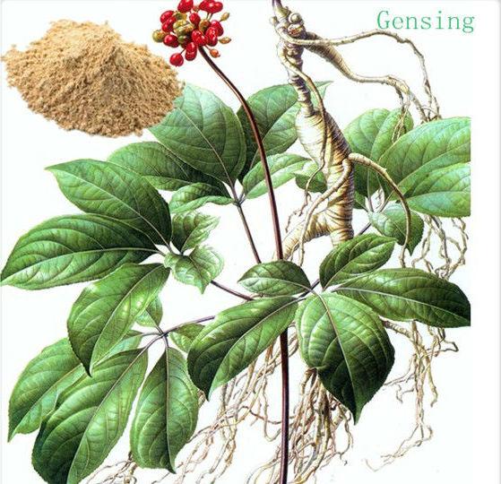 korean ginseng root