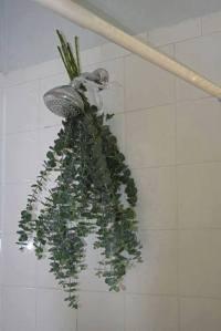 herbs bath