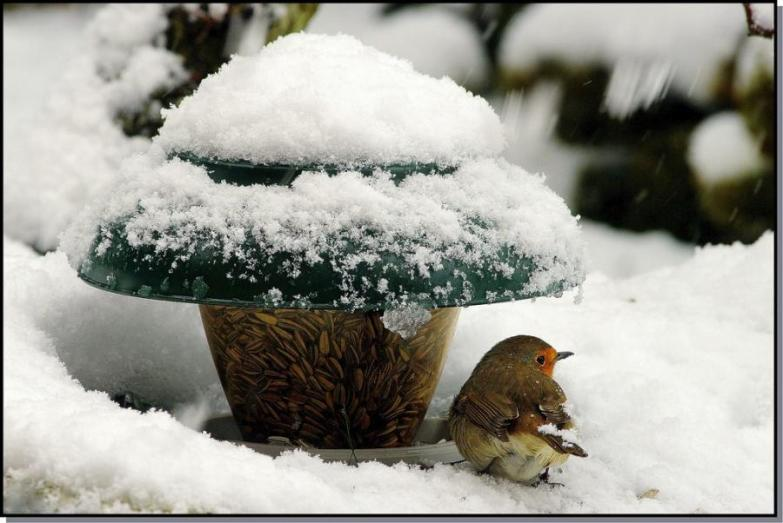bird feeder in snow