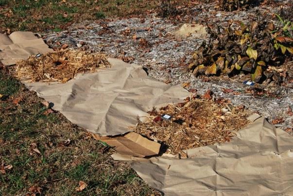paper bags mulch