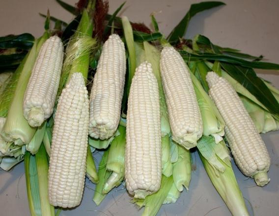 sliver queen corn