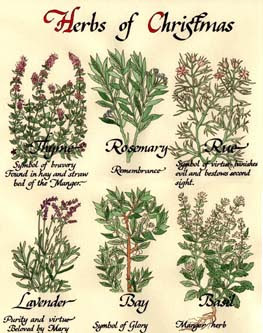 herbs of christmas