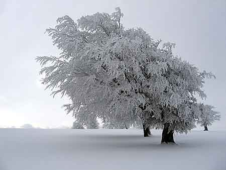 winter_trees