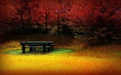 picnic-table-in-autumn-8950
